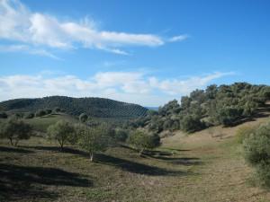 olivenhain2